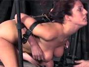 Lavander begs for torture